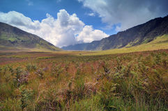 Savanna of Mount Bromo. Savanna at the back of Mount Bromo Stock Photo