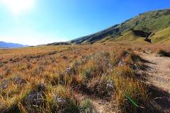 Savanna at Mount Bromo volcanoes Stock Photos