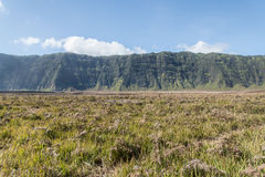 Savanna. Near Mt.Bromo in East Java Indonesia Royalty Free Stock Image