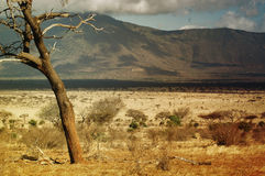 Savanna nel Kenia Fotografia Stock