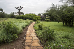 Savanna path in camp in africa Stock Photo