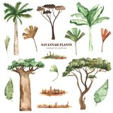 Watercolor clipart with savanna plants, palm trees, baobab, acacia, leaves, grass, dried flowers.