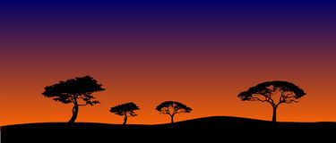 Savanna's landscape in evening. Silhouettes of savanna trees in sunset vector illustration