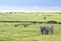Savanna scene. Picture of a typical savanna scene Royalty Free Stock Photo