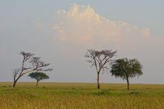 Savanna in Serengeti, Tanzania Royalty Free Stock Images