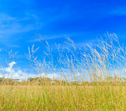 Savanna in the sunny day Stock Images