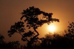 Savanna sunrise Stock Photo