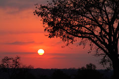 Savanna sunrise Royalty Free Stock Image
