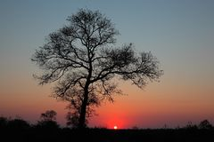 Savanna sunset Stock Images