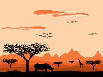 Savanna sunset in africa. With animal silhouettes Royalty Free Stock Photography