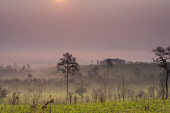 Savanna in Thailand Royalty Free Stock Photo