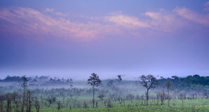 Savanna in Thailand Royalty Free Stock Image