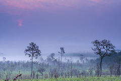 Savanna in Thailand Royalty Free Stock Images