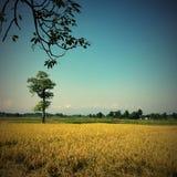 Savanna with tree and Himalayas range at horizont Royalty Free Stock Photo