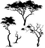 Savanna trees Royalty Free Stock Photography