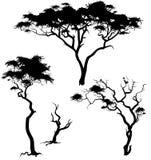 Savanna trees Royalty Free Stock Photography