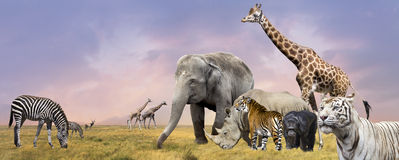 Savanna wild animals collage. Savanna  wild animals group collage Royalty Free Stock Photo