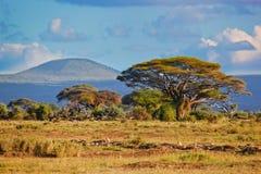 Savannaen landskap i Afrika, Amboseli, Kenya Arkivbilder