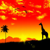 Giraffe and Savannah Sunset Stock Photo