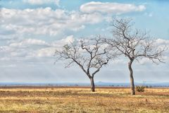 savannah afrykański zdjęcie royalty free