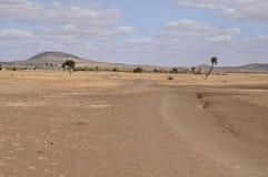 savannah afrykański Obrazy Stock
