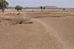 savannah afrykański Fotografia Royalty Free