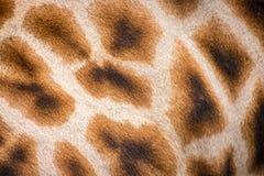 Savannah Animal Patterns giraff Arkivfoto