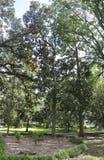 Savannah,August 8th:Park view from Savannah in Georgia USA Stock Image