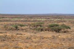 The savannah and bushland in Kenya. The savannah and bushland in the north of Kenya stock image
