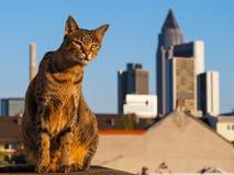 Savannah Cat with Frankfurt Skyline Royalty Free Stock Photography