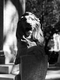 A lion in the sun in Savannah, Georgia, USA. Savannah, a coastal Georgia city, is separated from South Carolina by the Savannah River. It's known for manicured Royalty Free Stock Photos