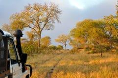 Savannah Early Morning, Zimbabwe Royalty Free Stock Photo