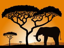 Savannah - elephant. Dawn in the African savanna. Silhouettes of trees and elephant against the backdrop of an orange sky Stock Image