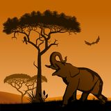 Savannah - elephant. Royalty Free Stock Photo