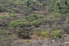 The Savannah in Zimbabwe. The Savannah and forest in Zimbabwe royalty free stock photos