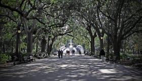 Savannah Stock Image