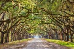 Savannah Georgia, USA historisk väg arkivfoton