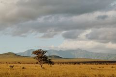 Savannah Grassland nel parco nazionale contro un fondo della montagna, Kenya di Tsavo Immagine Stock Libera da Diritti