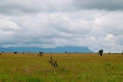 Savannah Grassland no santuário de animais selvagens dos montes de Taita, Voi, Kenya Foto de Stock Royalty Free