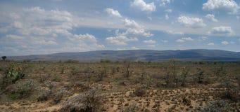Savannah i Kenya Afrika arkivbilder