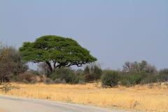 Savannah i sydliga Afrika arkivbild