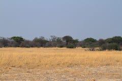 Savannah i sydliga Afrika fotografering för bildbyråer