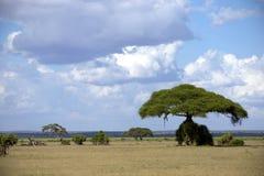 Savannah in  Kenya. Africa kenya sawana bush Stock Photo