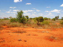 Savannah landscape. View of african savannah with red land and blue sky with clouds in a sunny day royalty free stock photography