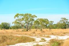 Savannah Landscape Imagen de archivo libre de regalías