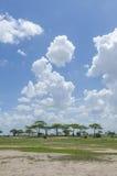 Savannah landscape with acacias Royalty Free Stock Photo