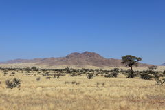 Savannah landscape in Namibia Stock Image