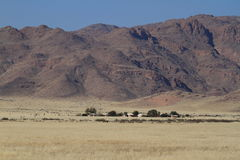Savannah landscape in Namibia Royalty Free Stock Photo