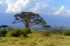 Savannah. Landscape in the national park in kenya Royalty Free Stock Photography