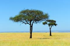 Savannah. Landscape in the national park in kenya royalty free stock photo
